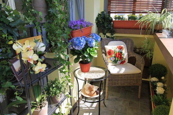 фото: зимний сад на маленьком балконе