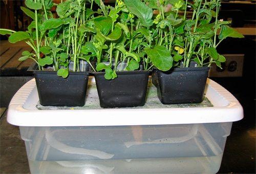 гидропоника для выращивания овощей