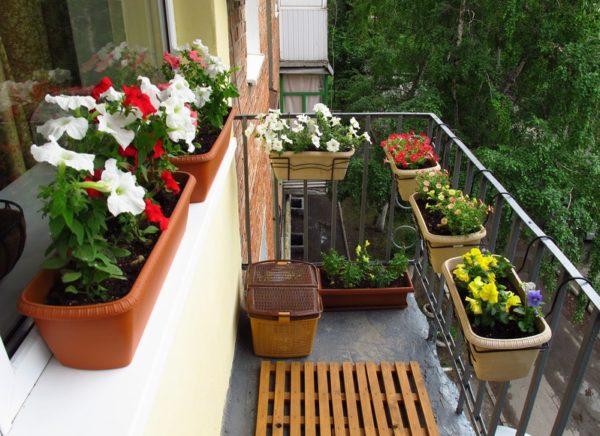 фото: кашпо на балконе