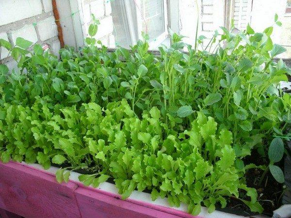 фото: зелень на балконе