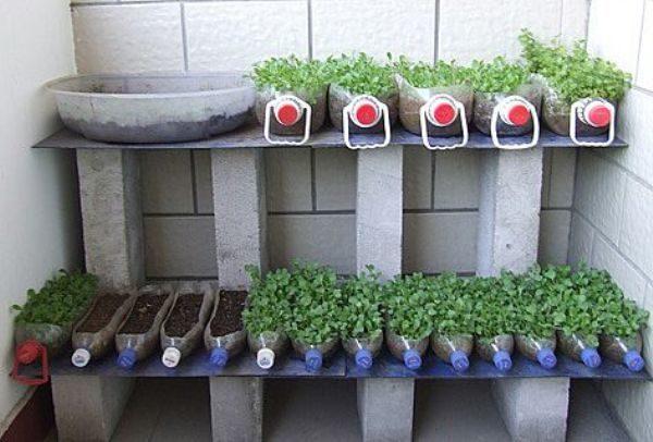 фото: огурцы на балконе выращивание в пластиковых бутылках