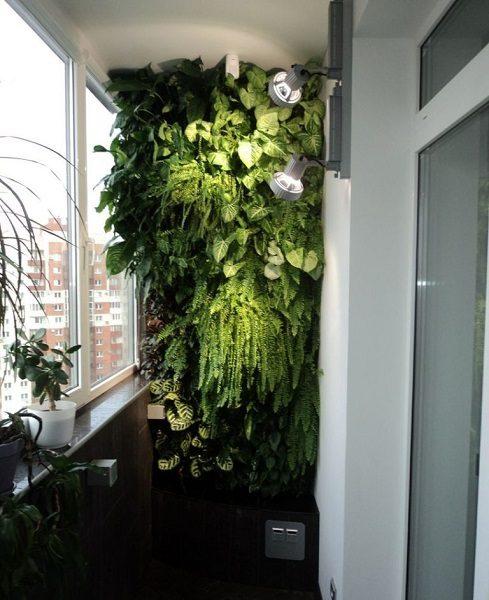 фото: Зимний сад на неотапливаемом балконе
