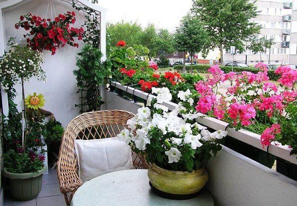 какие цветы можно выращивать в балконных ящиках