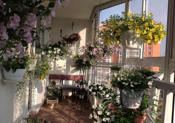Цветы для балкона на теневой стороне