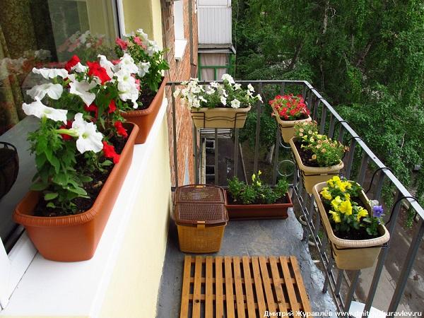 фото: ящики с цветами на открытом балкона