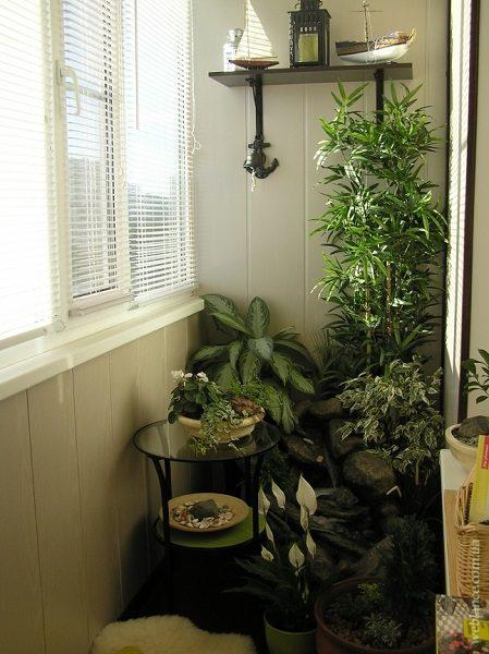 фото: растения в вазонах на балконе