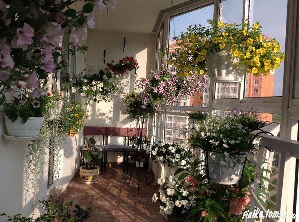 фото: ампельные цветы в подвесных горшках