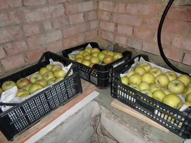 хранение яблок в пластиковых ящиках