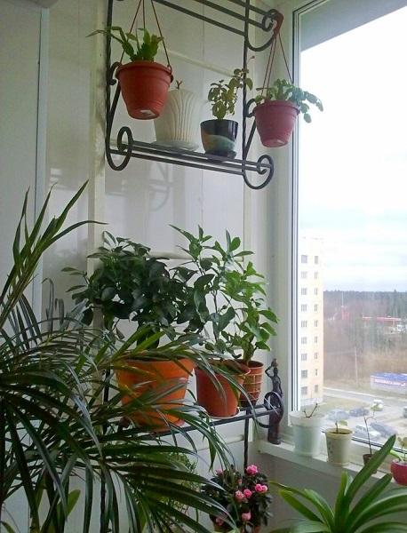 используем пожарную лестницу на балконе как полки для цветов