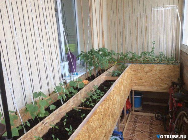 фото: грядки на балконе