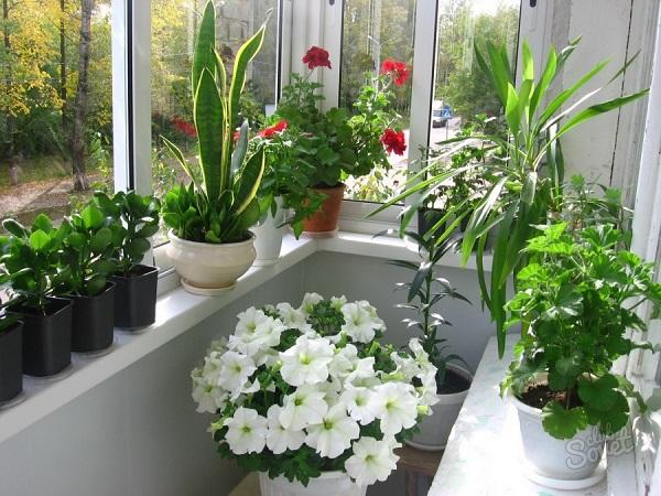 фото: цветы на балконе