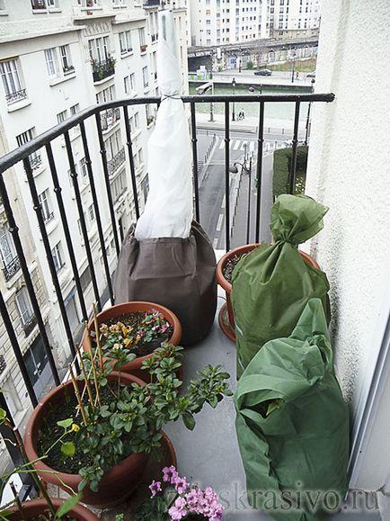 зимовка роз на балконе
