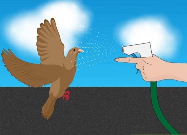 отпугивание голубей водой