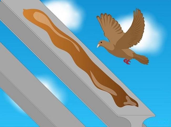 намазать перила вазелином от голубей