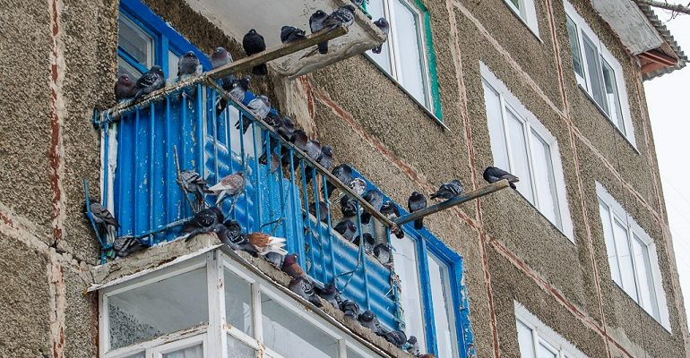 как избавиться от голубей на балконе