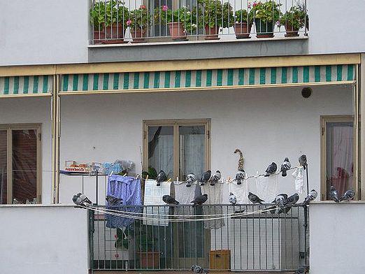 голуби на открытом балконе