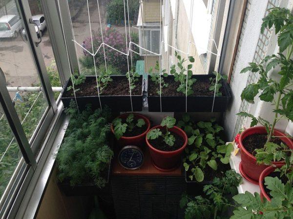мини огород на хрущевском балконе